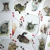 Carte 3D Gatti