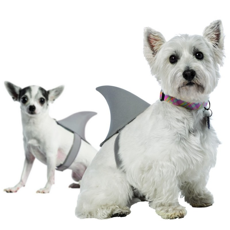 Pinna da squalo per cani