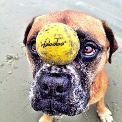 Pallina Waboba per cani