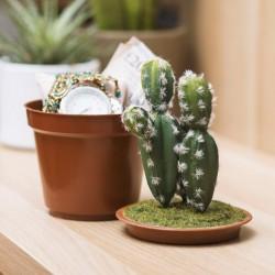 Cactus con nascondiglio segreto