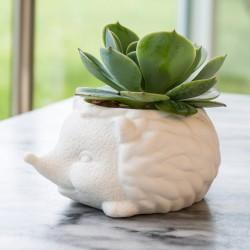 Mini vaso Riccio