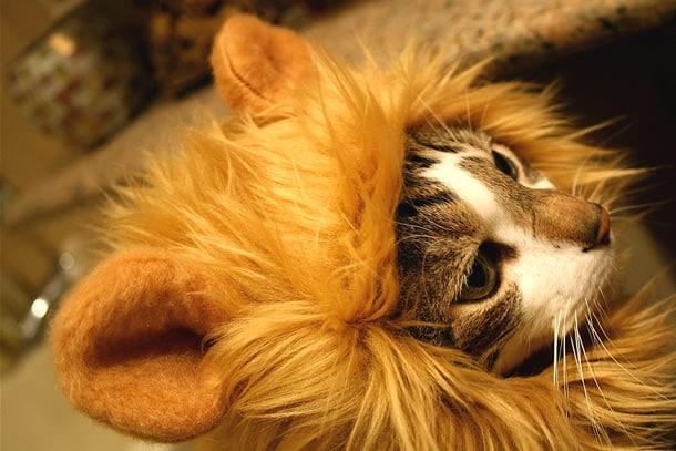 4b30e3a7e2ebdc I cappucci animaleschi per gatti | DottorGadget