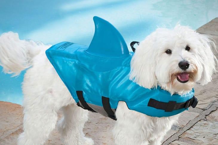 Il giubbetto squalo per cani dottorgadget for Gadget da piscina