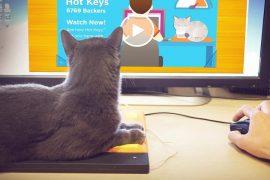 Tastiera per gatti riscaldata