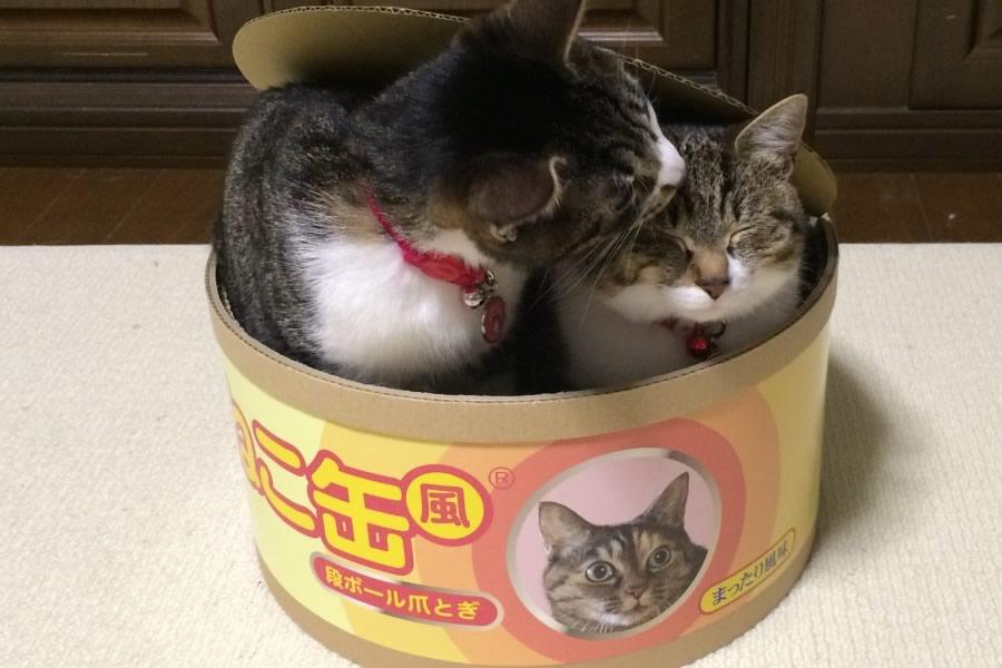 Scatoletta cibo per gatti gigante dottorgadget - Cucina casalinga per gatti ...