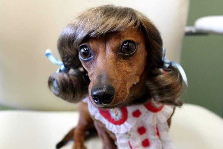 Le parrucche per animali dottorgadget for Cani che non vogliono fare il bagno