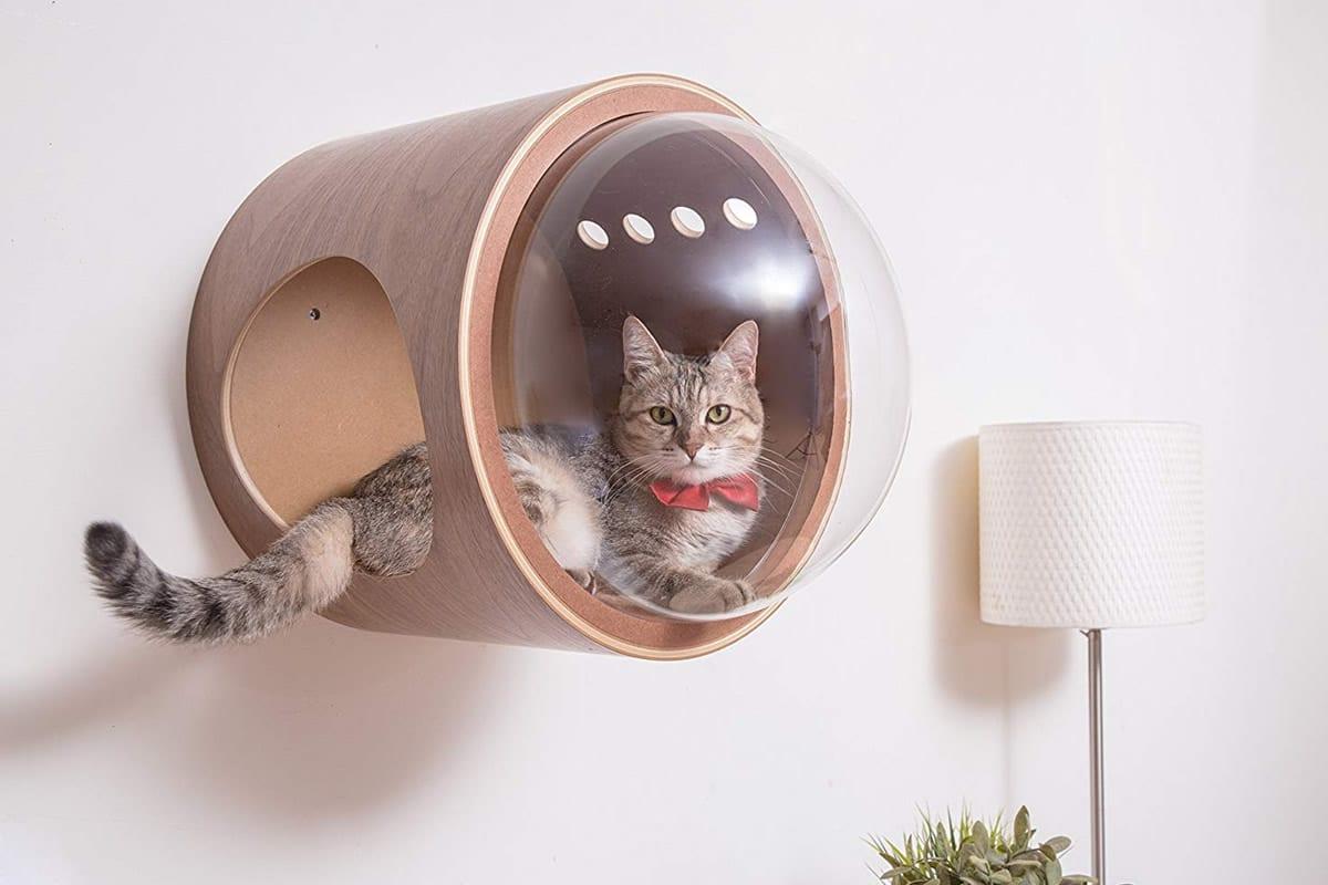 Casetta con obl per gatti dottorgadget - Cucina casalinga per gatti ...