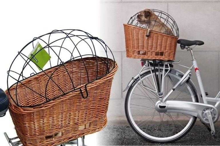 Cane in bicicletta... cosa dice la legge! Si può andare in ...