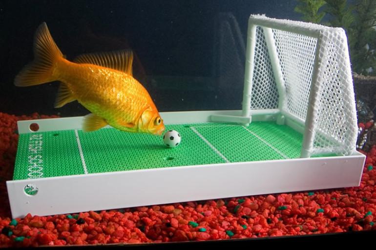 Il kit scuola per pesci rossi dottorgadget for Piscina per pesci rossi