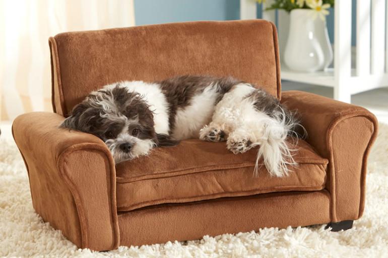 Il divanetto per animali domestici dottorgadget for Cuccia per cani ikea prezzi