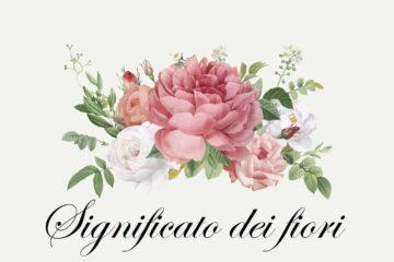 Significato dei fiori, per sceglierli non solo per il loro aspetto