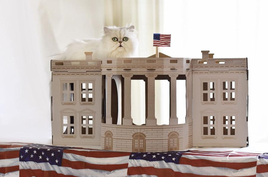 Casa Bianca di cartone per gatti