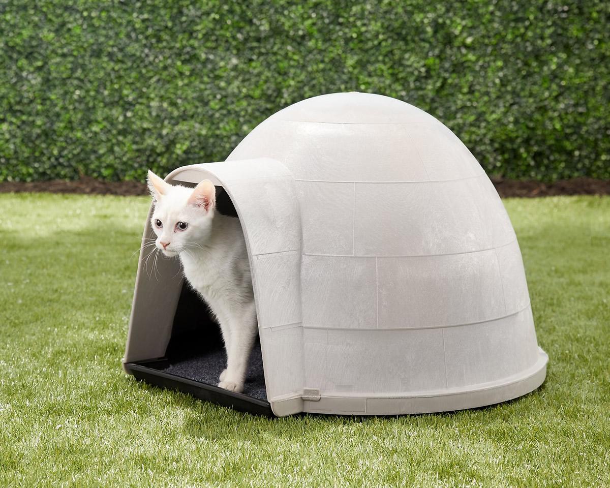 Igloo per gatti